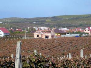 pohled z vinohradu při sbírání hroznů