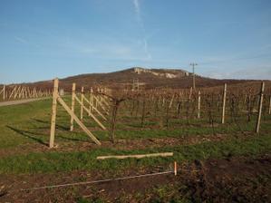 1.4.2011 - zaměřujeme po vyklučení vinice