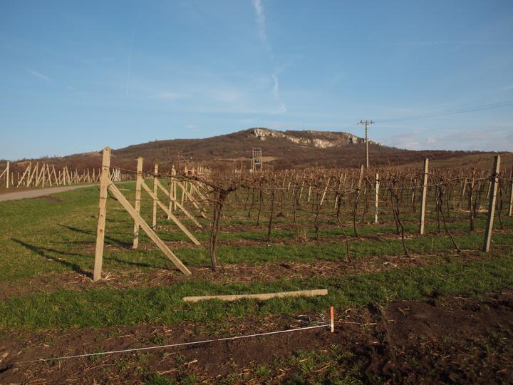 Hrubá stavba 06/2011 - 1.4.2011 - zaměřujeme po vyklučení vinice