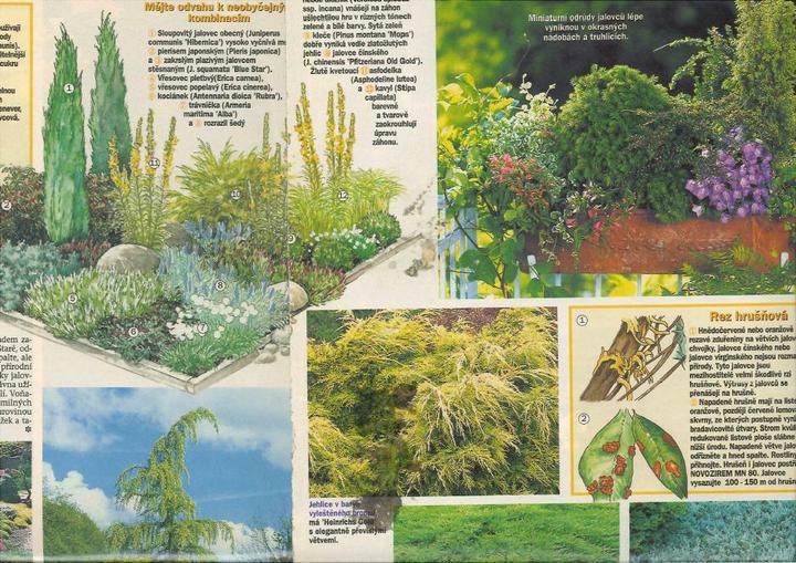 Zahrada - inspirace - Obrázek č. 77