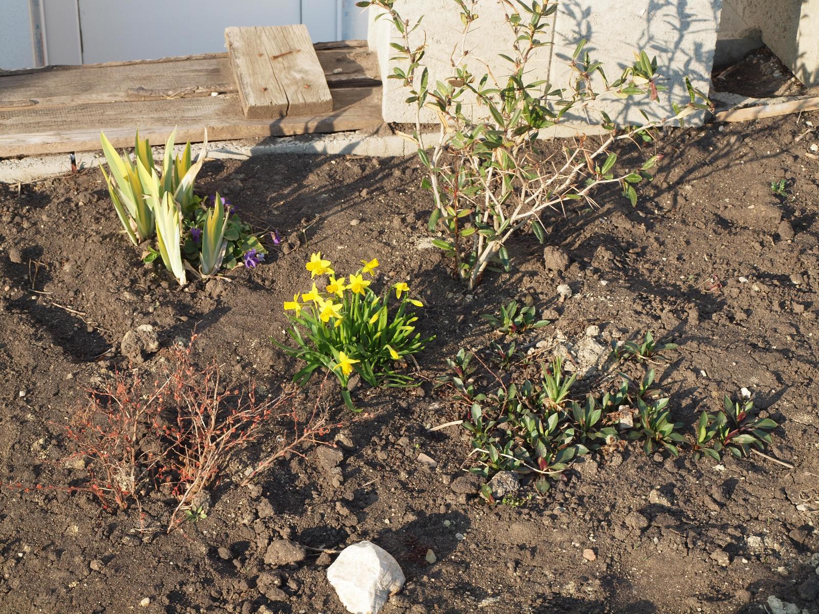 Zahrada - jaro 2014