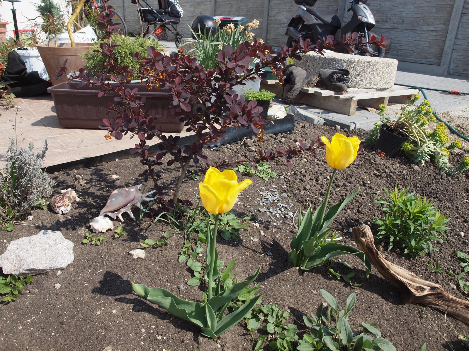 Zahrada - Obrázek č. 94