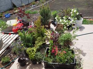 tak jsem včera vzala zahradnictví c Čejči útokem :-)