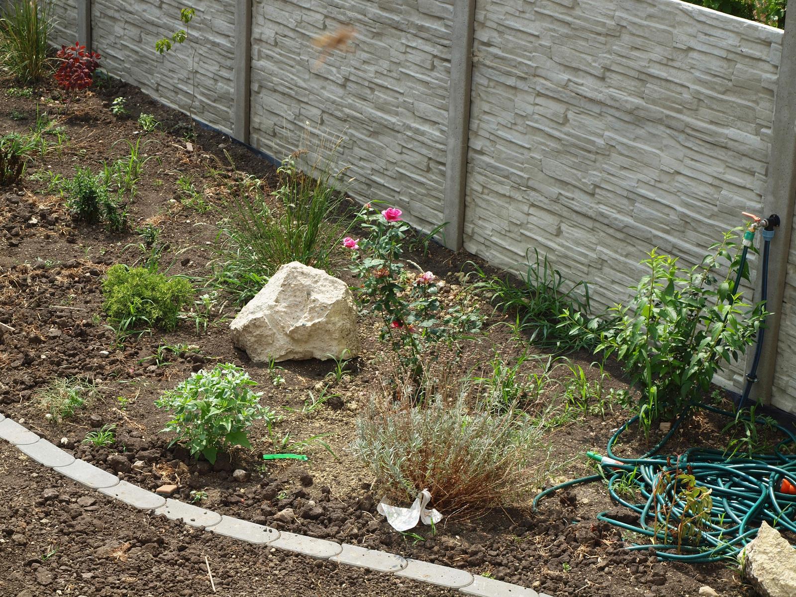 Zahrada - Obrázek č. 81