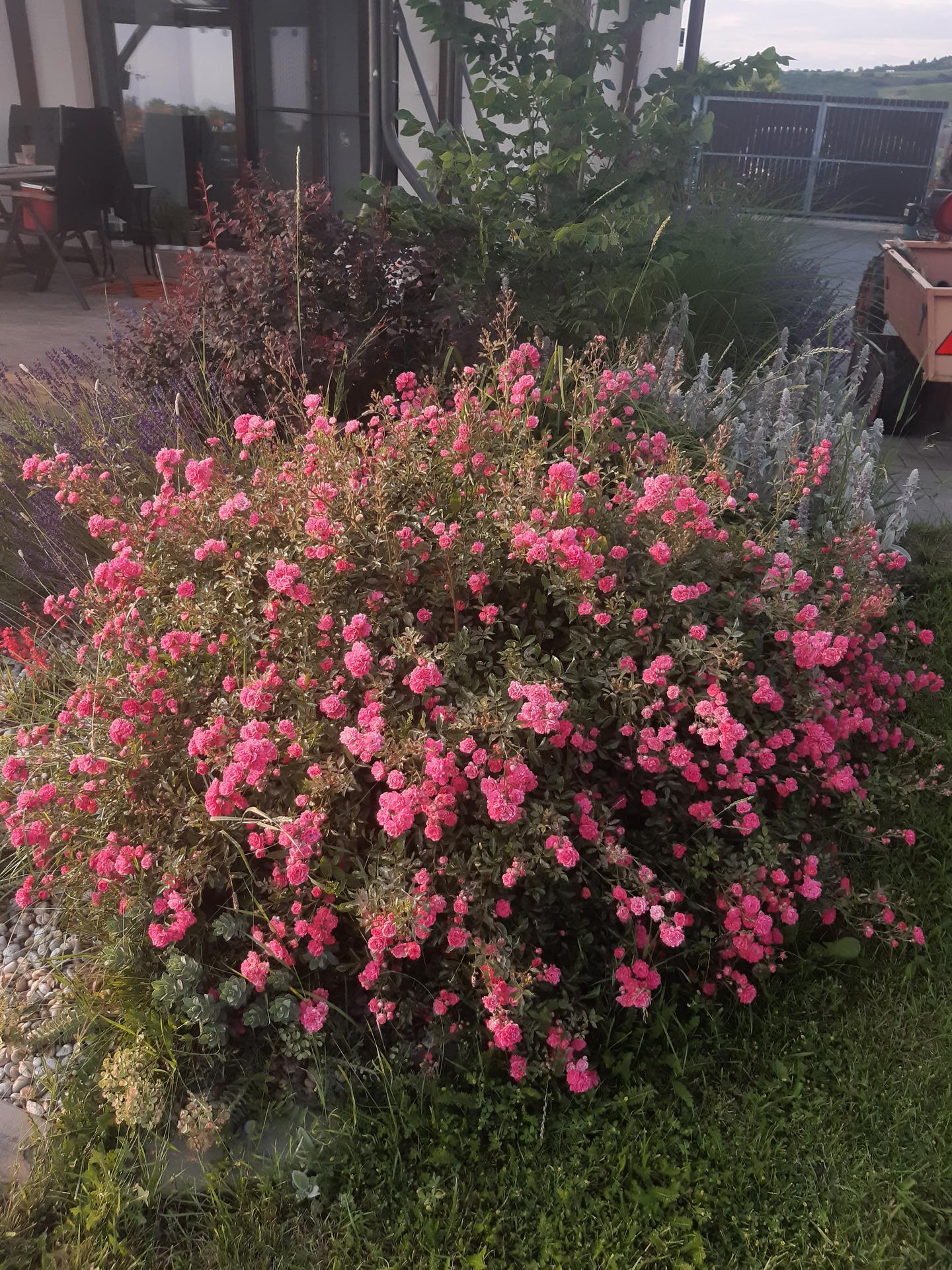 Zahrada - Obrázek č. 152
