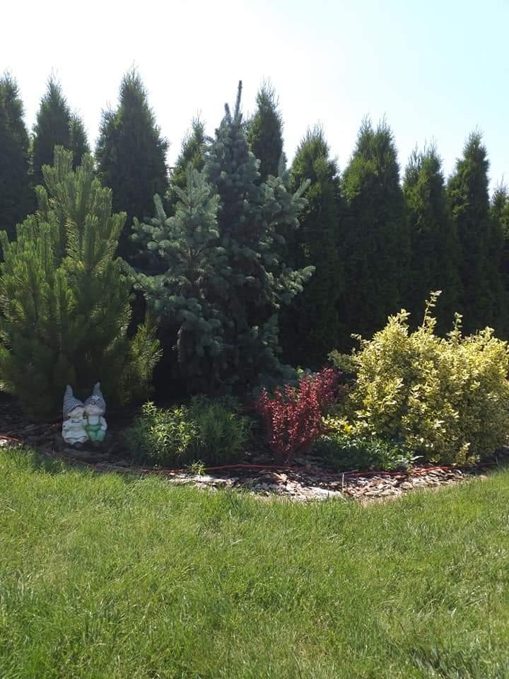 Zahrada - inspirace - Obrázek č. 299
