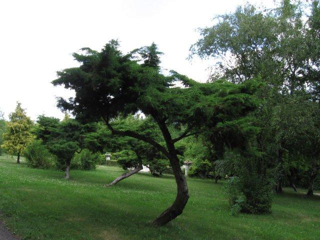 Peťko a Evka...14.7.2007 :) - ...A tu sa budeme fotiť v náš velký deň...Arborétum Mlyňany