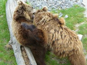 takhle při obřadu vyváděli medvědi