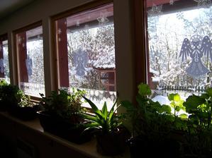 Vypadá to, že muškáty to moje zahradničení opět přežijí.