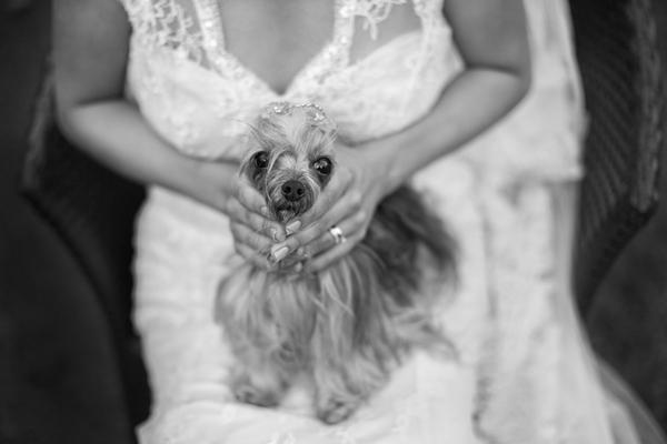 Zábavné svadobné fotografie inšpirácie - Obrázok č. 89