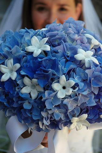 Modré kyticie inšpirácie - Obrázok č. 36