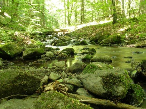 Krásne miesta Slovenska vhodné na svadobné fotenie - Badínsky prales