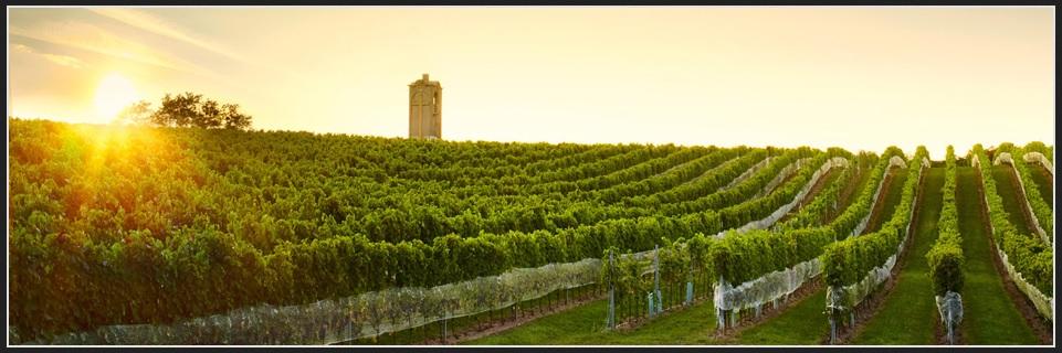 Krásne miesta Slovenska vhodné na svadobné fotenie - Malokarpatské vinohrady