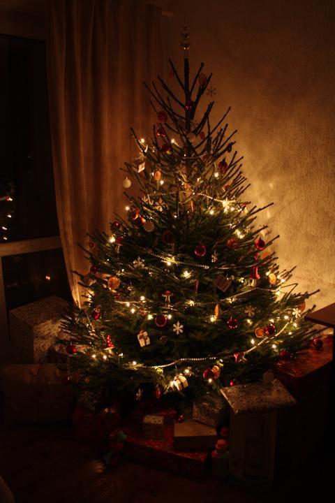 Hnízdo - Letošní Vánoce ..