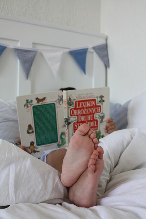 Hnízdo - Zdá se, že postel vyhovuje přísným požadavkům nájemníka..