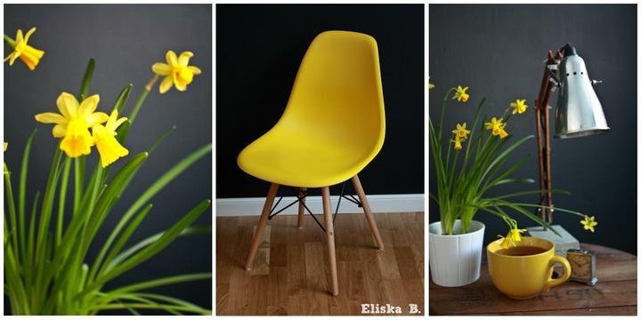 Různobarevné domácí - První jarní den .. Žlutý