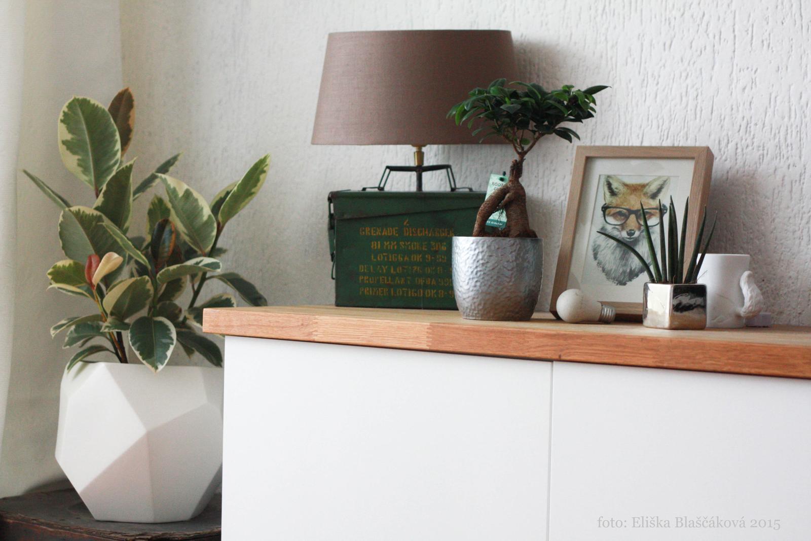 Různobarevné domácí - Koutek v obýváku s novým květináčem a ficusem