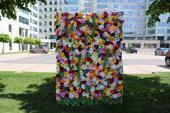 Kvetinová foto stena 250 cm x 150 cm na prenájom ,