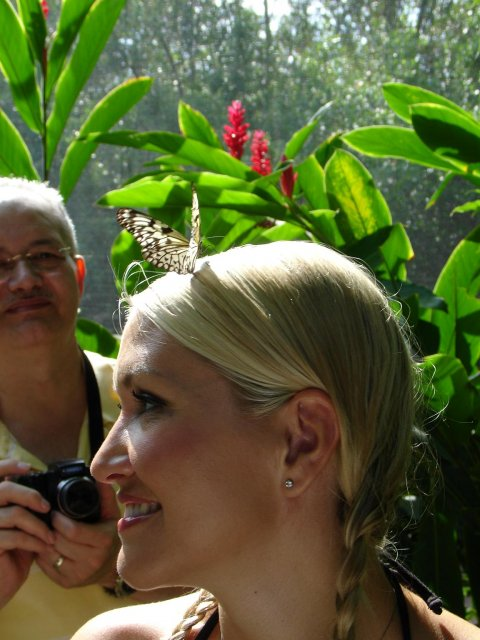 Andrea{{_AND_}}Roman - motyli farma na ostrove Aruba