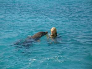 Curacao plavani s delfiny