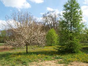 Zahrada na 1. května