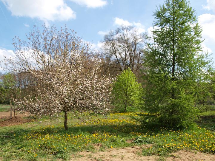 Stavba - 2. a 3. týden - Zahrada na 1. května