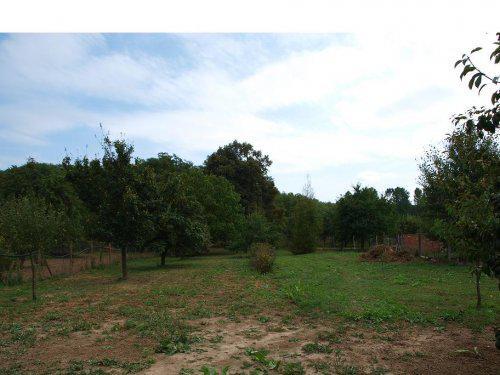 Stavíme s Rýmařovem - 2/3 pozemku - pohled ze severu směrem na jih, vlevo a vzadu vzrostlé stromy