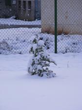 Takhle dopadla naše jedlička při letošním prvním sněhu, je z toho celá nakřivo