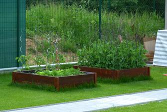 zelenine sa v záhonoch celkom páči. po prvej úrode redvičky sa len tak zaprášilo, druhá je už na ceste :-)