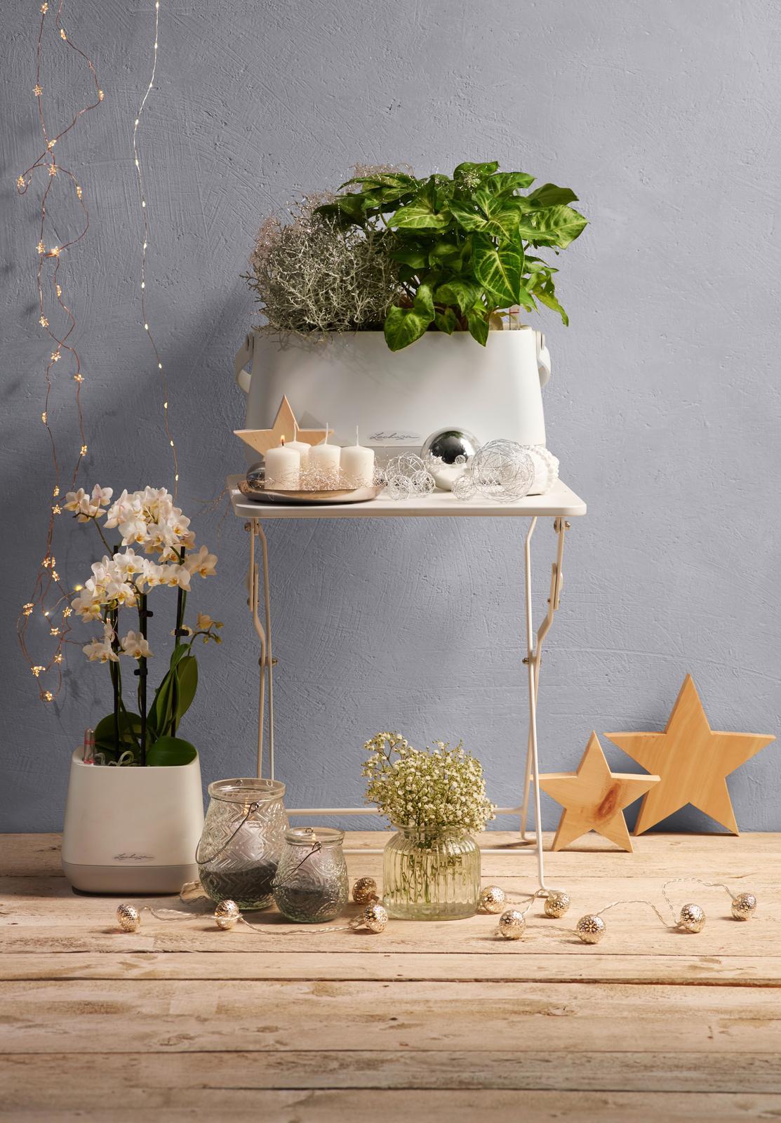 Pripravujeme nový kvetináč Yula | LECHUZA - Novinka! Samozavlažovacie kvetináče Yula | LECHUZA