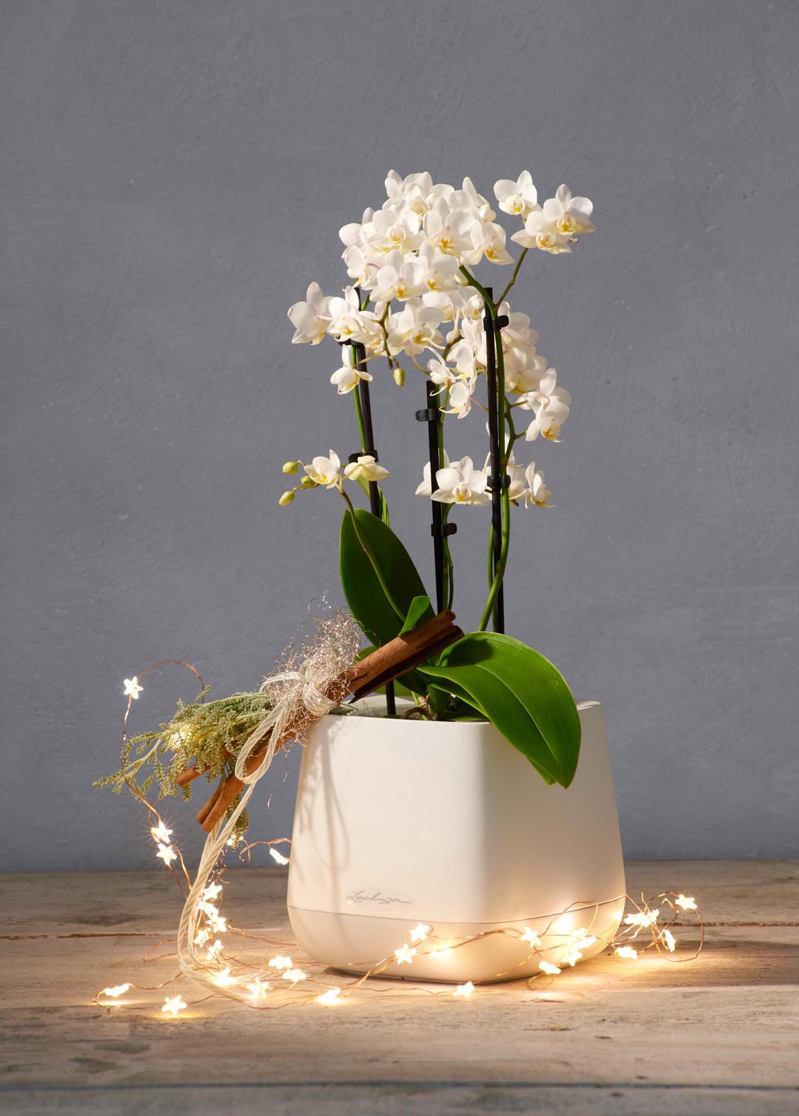 Pripravujeme nový kvetináč Yula | LECHUZA - kvetináč 15 x 17 x 17 cm | 12,99 €