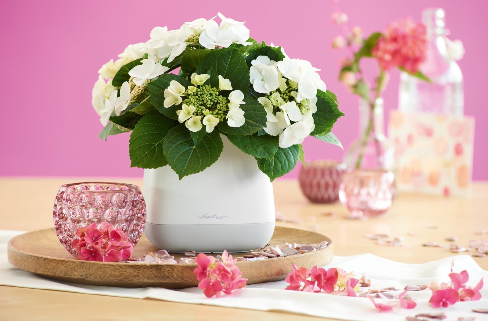 Pripravujeme nový kvetináč Yula | LECHUZA - Obrázok č. 16