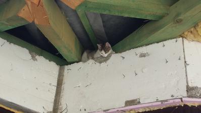 Mačka sa bála poterákov :-)