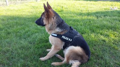 A straži nás policia :-)