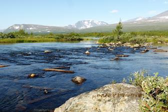 Líbánky v národním parku ve Švédsku