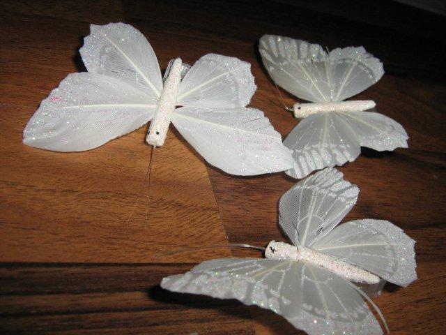 29.8.2009 - motýliky ešte neviem kam :)