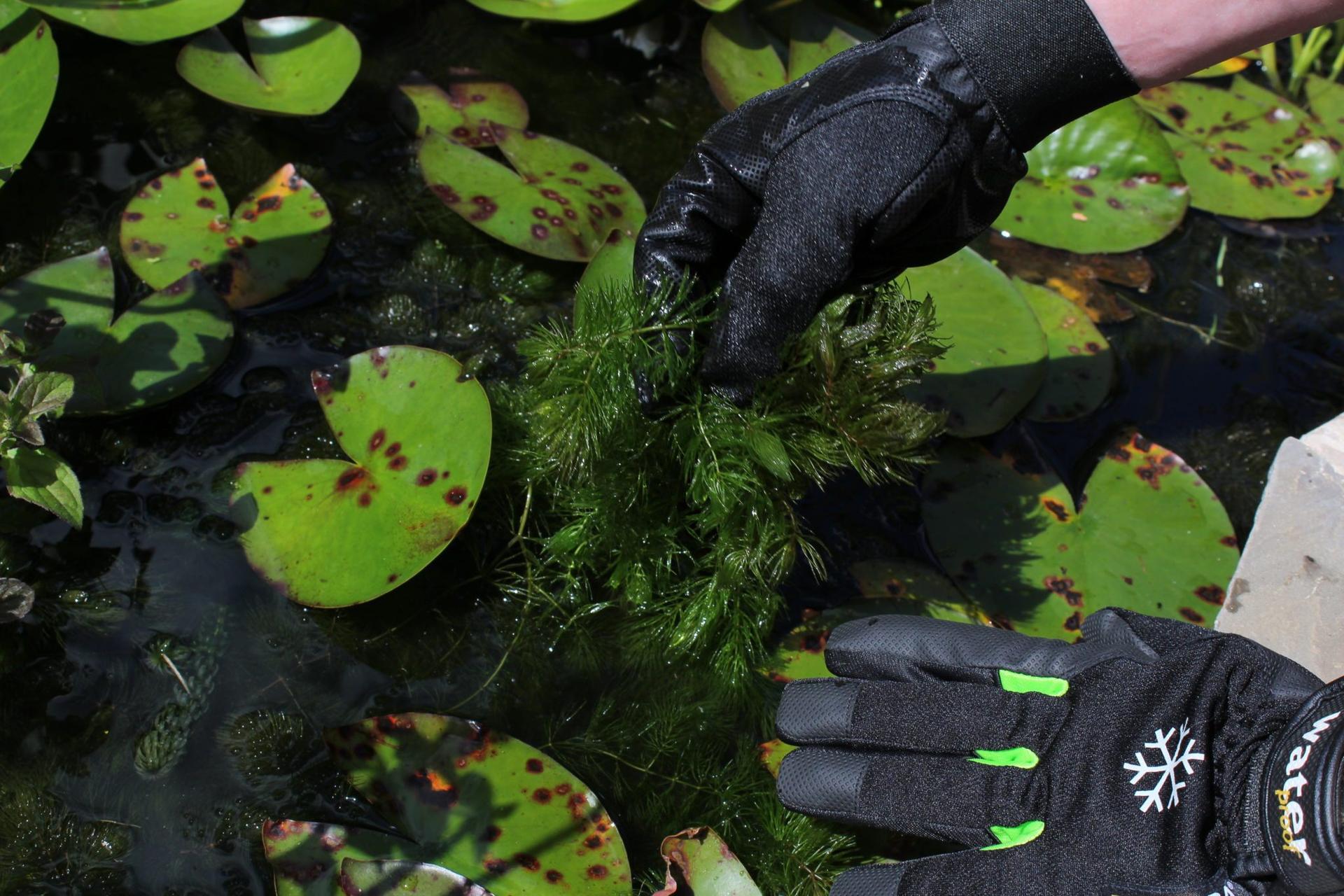 Tegera rukavice do záhrady - Vodeodolné rukavice so zimnou podšívkou Tegera® 517