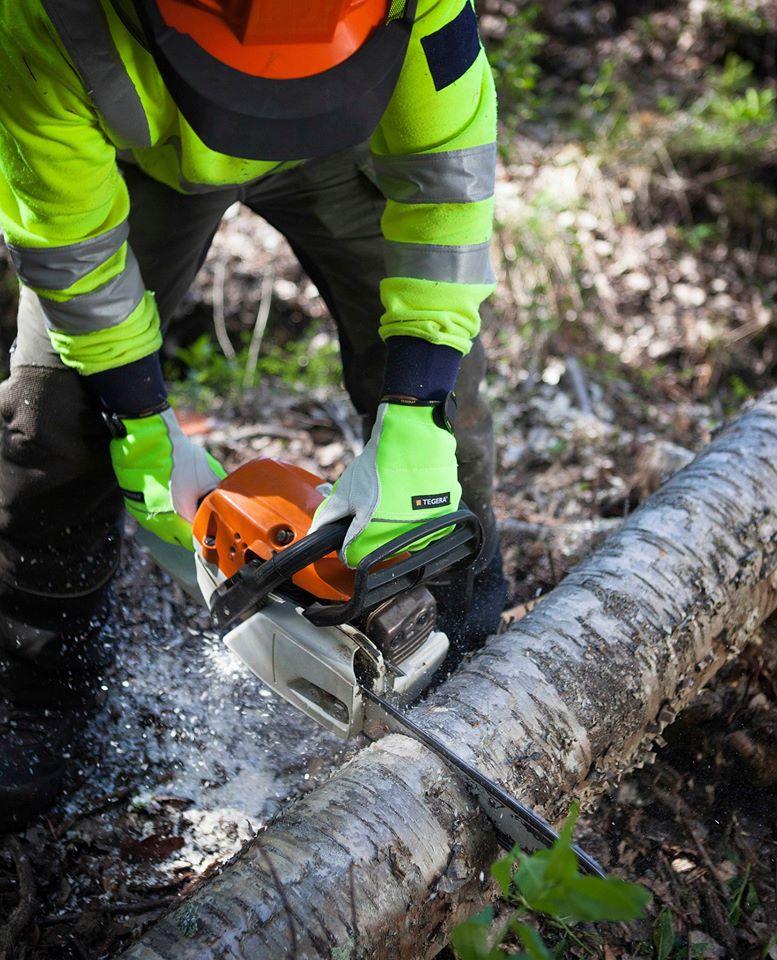 Rukavice pre prácu s motorovou pílou 🧤  Špeciálne rukavice pre prácu s motorovou pílou zaručujú najvyššie možné bezpečie. Vďaka lícovej hovädzine najvyššej kvality a unikátnej podšívke Dyneema® dokáže táto rukavica zastaviť pílu po kontakte s ňou. Pozrite si prezentačné video na: https://www.tegera.sk/produkt/ochranne-rukavice-tegera-951/ - Obrázok č. 1