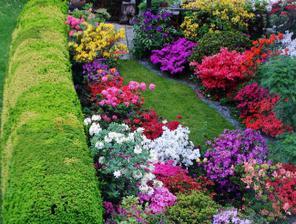 azalky v záhrade