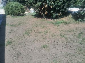 ..zasazená tráva už vykukuje..
