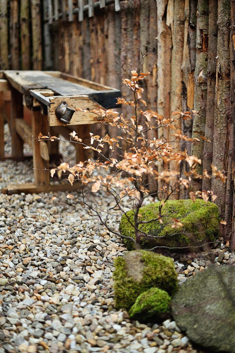 ..our rustic cottage.. - Předzahrádka se z jara trochu doladila, přibil další stromek a kameny s mechem.