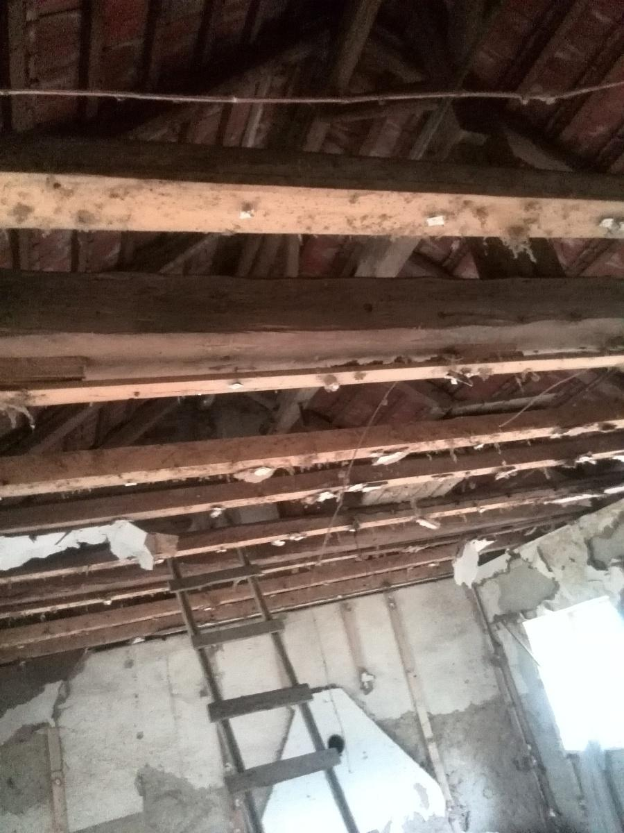 ..our rustic cottage.. - Pohled na sundaný strop v baráčku, zbylé trámy jsme použili na stavbu kůlny.