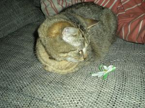kocour dostal jeden nepovedený zkušební vývazek na hraní.... náramně se mu líbil než ho rozcupoval a pak vyčerpáním usnul... :-)