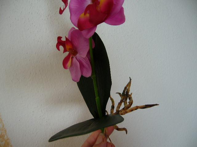 orchidea - Obrázok č. 2