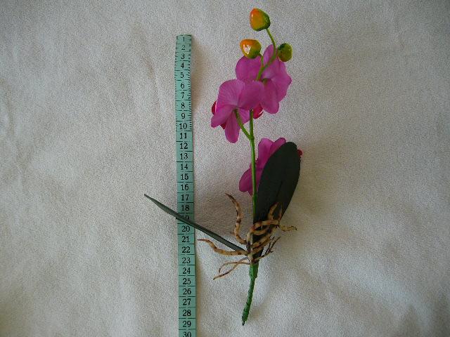 orchidea - Obrázok č. 3