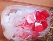 Lupene ruží,