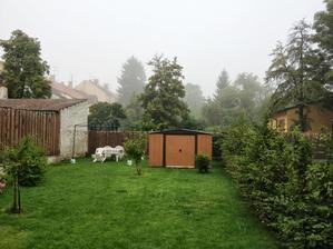 mlha - ale zahradka uz pekne zarusta
