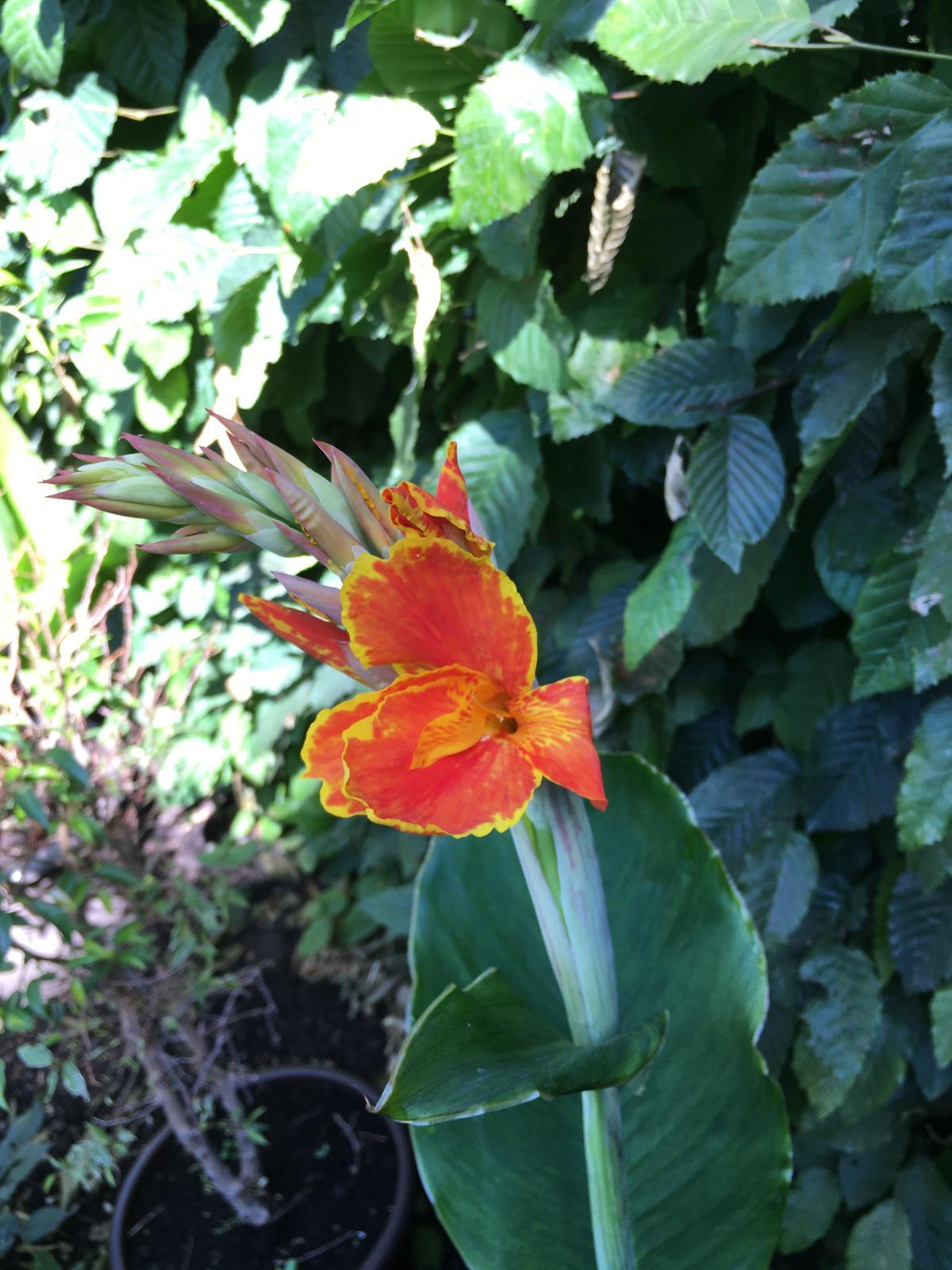 2020 😍 🌞 - Kana Tarouking jde konecne do kvetu - ta barva bude brutalni