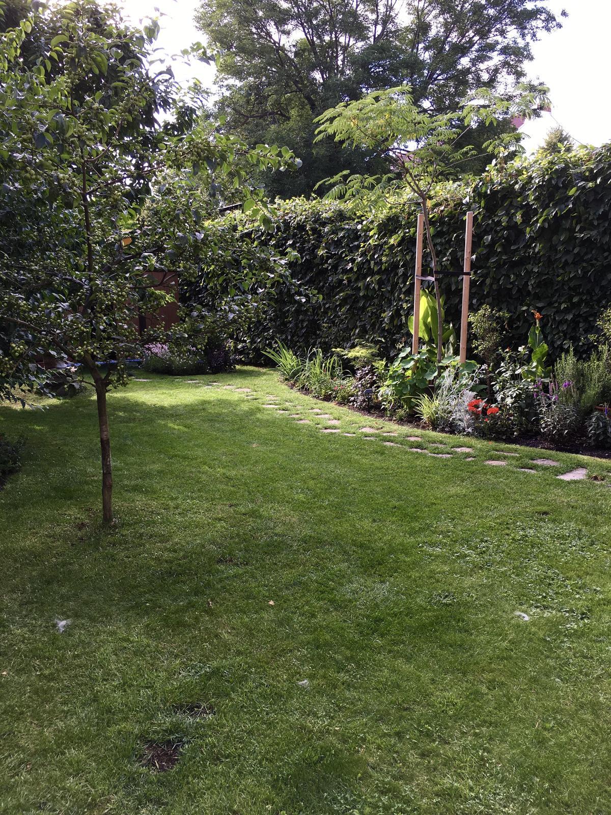2020 😍 🌞 - Jak okudlat zivy plot aneb rovne strizena zelena zed je nuda 😂