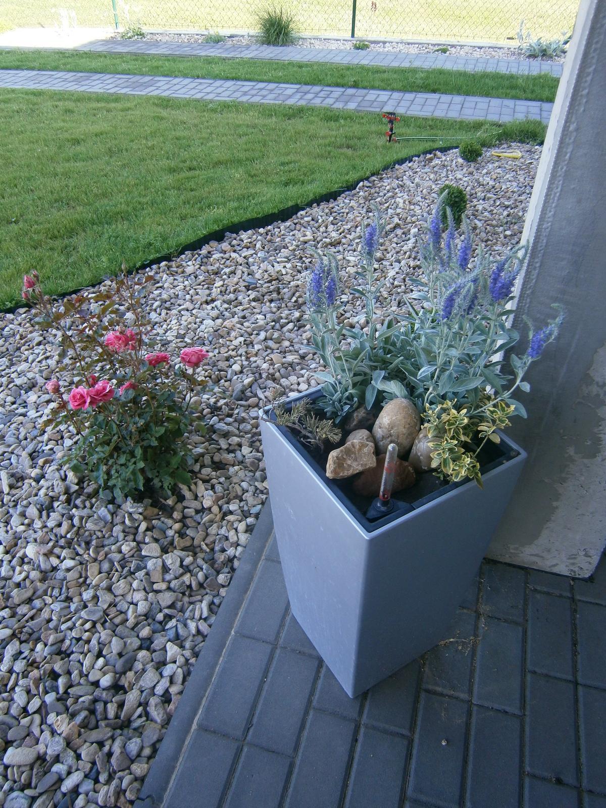 Zahrada a předzahrádka - Obrázek č. 8
